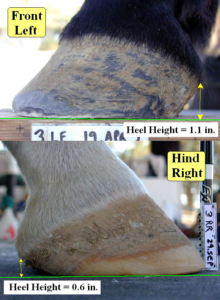 Measurement of Horse Heel Height - Diagonal High/Low Issue Example