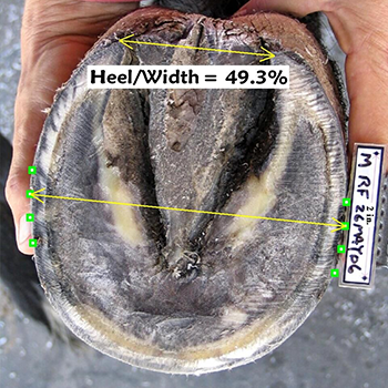 Metron Horse Hoof Featured
