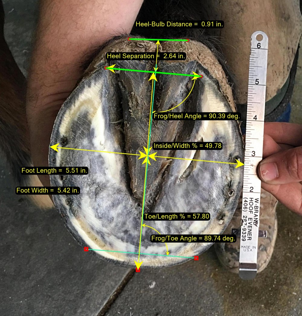 Hoof Image - Solar Photo Measurement