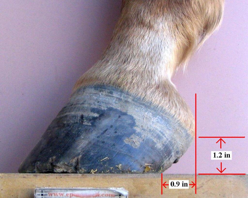 Example of Horse High Heel