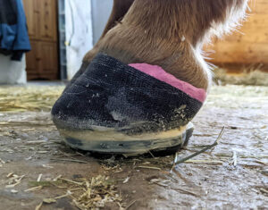 therapeutic-horse-shoes-for-horse-hooves